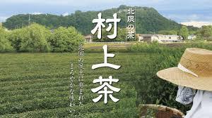 村上茶新茶シーズン